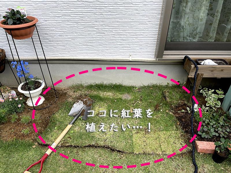 芝を剥がす計画
