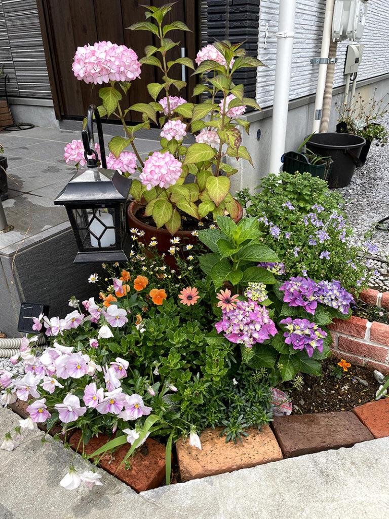 二種類の紫陽花がある花壇